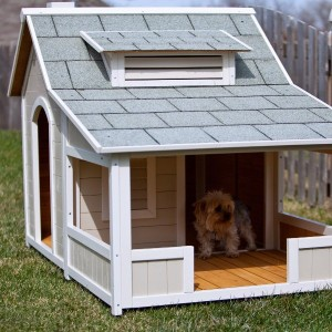 Doghouse Windows
